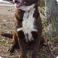 Adopt A Pet :: Blake - Bedminster, NJ