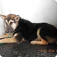 Adopt A Pet :: A572037 - Oroville, CA