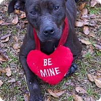 Adopt A Pet :: Maggie Reed - Bishopville, SC