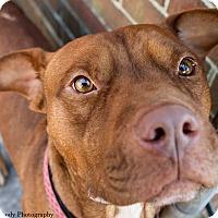 Adopt A Pet :: Zo - Jacksonville, NC