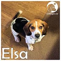 Adopt A Pet :: Elsa - Pittsburgh, PA