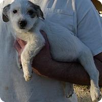 Adopt A Pet :: LITTLE GIRL - Corona, CA