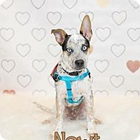 Adopt A Pet :: Newt - Columbus, OH
