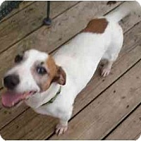 Adopt A Pet :: Max **ADOPTION PENDING** - Thomasville, NC