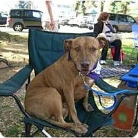 Adopt A Pet :: Precious - Sherman Oaks, CA