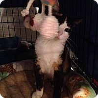 Adopt A Pet :: Smuckers - Byron Center, MI