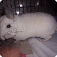 Adopt A Pet :: Snow - Avondale, LA
