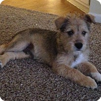 Adopt A Pet :: Fozzie - Houston, TX