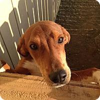 Adopt A Pet :: Gabe, Northern California - Woonsocket, RI
