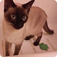 Adopt A Pet :: Cisco - Fairborn, OH