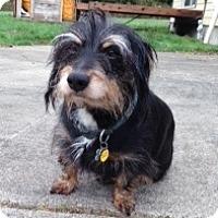 Adopt A Pet :: ROLF - Portland, OR