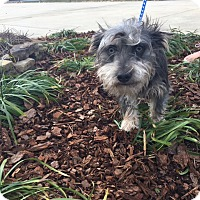 Adopt A Pet :: Doobie - Gadsden, AL