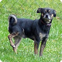 Adopt A Pet :: Chong--RESCUED! - Marlinton, WV