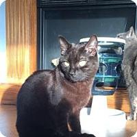 Adopt A Pet :: Gump - Cheltenham, PA