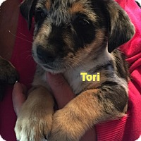 Adopt A Pet :: THE T LITTER - CHICAGO, IL