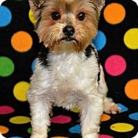 Adopt A Pet :: Lettie - Abilene, TX