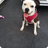 Adopt A Pet :: Molly Malone - Los Angeles, CA