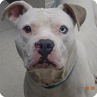 Adopt A Pet :: Zeus (Lonely Heart) - Gulfport, MS