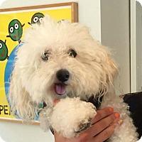 Adopt A Pet :: Murphy - Redondo Beach, CA