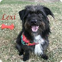 Adopt A Pet :: Lexi - El Cajon, CA