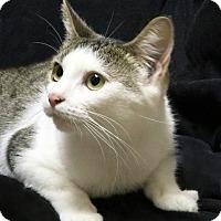 Adopt A Pet :: Bunny - Rochester, NY
