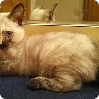 Adopt A Pet :: Lucy Liu - Ocala, FL