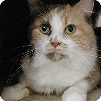 Adopt A Pet :: Ivy - Cloquet, MN
