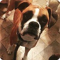 Adopt A Pet :: Wren - Brentwood, TN