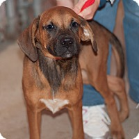 Adopt A Pet :: Jill - New Martinsville, WV
