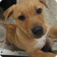 Adopt A Pet :: Mirabella - Snow Hill, NC