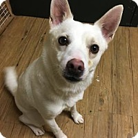 Adopt A Pet :: Blanco - Chicago Heights, IL