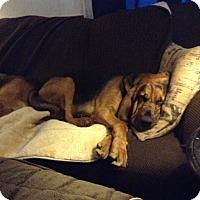 Adopt A Pet :: Tracker - Fayetteville, AR