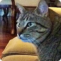Adopt A Pet :: Solomon - Yukon, OK
