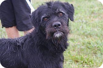 Shaggy-Prison Dog | Adopted Dog | 12D0434 | Elyria, OH ...