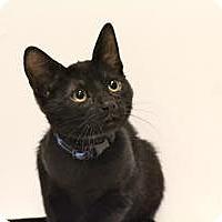 Adopt A Pet :: Mr. Meowgie - Sacramento, CA