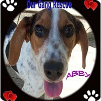 Adopt A Pet :: Abby - Cincinnati, OH