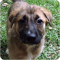 Adopt A Pet :: Mocha - Pike Road, AL