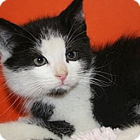 Adopt A Pet :: FOSTER - SILVER SPRING, MD