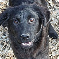 Adopt A Pet :: Hillary - PENDING, in Maine - kennebunkport, ME