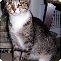 Adopt A Pet :: Maggie Mae - Alexandria, VA