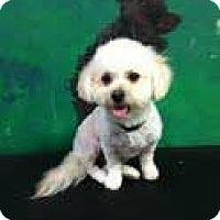 Adopt A Pet :: sparkle - Goleta, CA