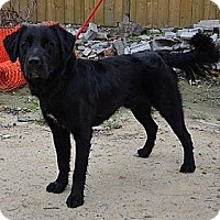 Adopt A Pet :: Reuben - Hamilton, ON