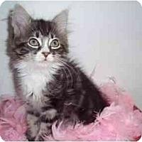 Adopt A Pet :: Taffeta & Timothy - Arlington, VA