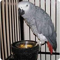 Adopt A Pet :: Buddy - Salt Lake City, UT