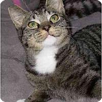 Adopt A Pet :: Max - Modesto, CA
