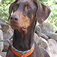Adopt A Pet :: Niko - Fillmore, CA