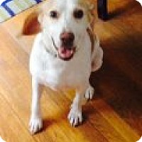 Adopt A Pet :: Stewie (Pending Adoption) - Quentin, PA