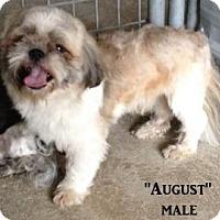 Adopt A Pet :: August - Gainesville, FL