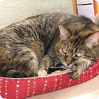Adopt A Pet :: Lois - Fairbury, NE