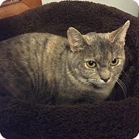 Adopt A Pet :: Georgia - Davenport, IA